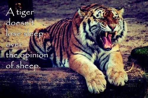 tigersleep