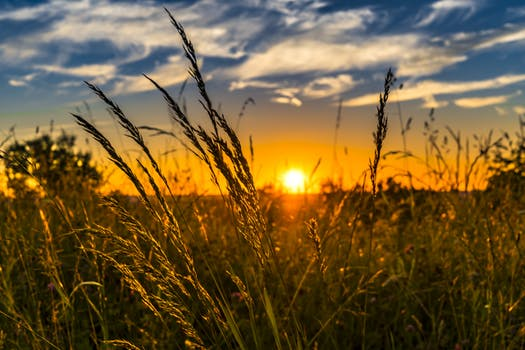 summer-sunset-meadow-nature-442407